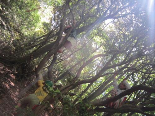 森のようちえん
